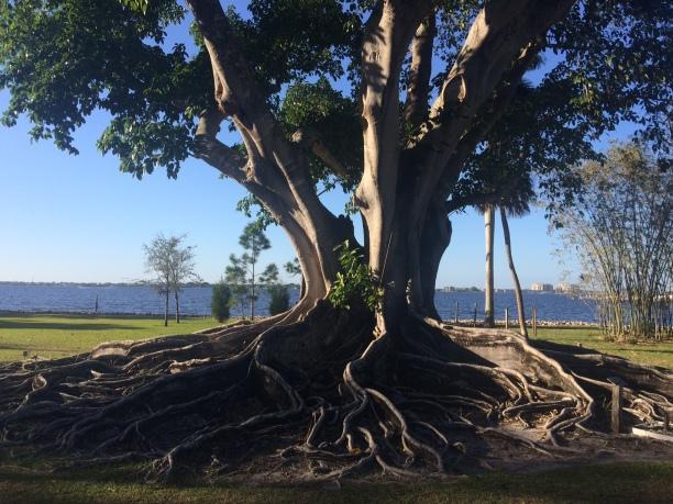 edison_tree