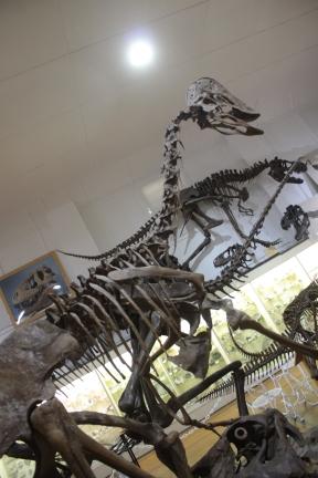 DinoIMG_9569