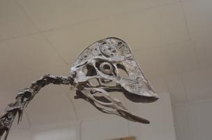 DinoIMG_9571