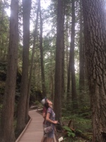Trail of the Cedars had big trees