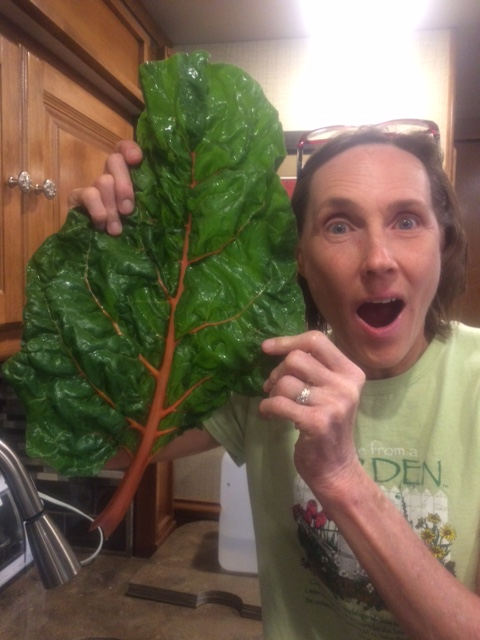 Swiss chard bigger than my head!