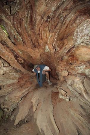 Bob explores fallen tree