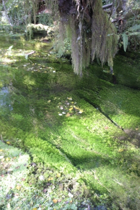 Hall of Mosses river sparkles